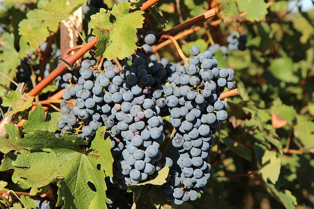 comprar vino de la tierra de Cádiz