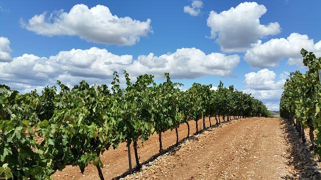 Comprar vino Rioja online